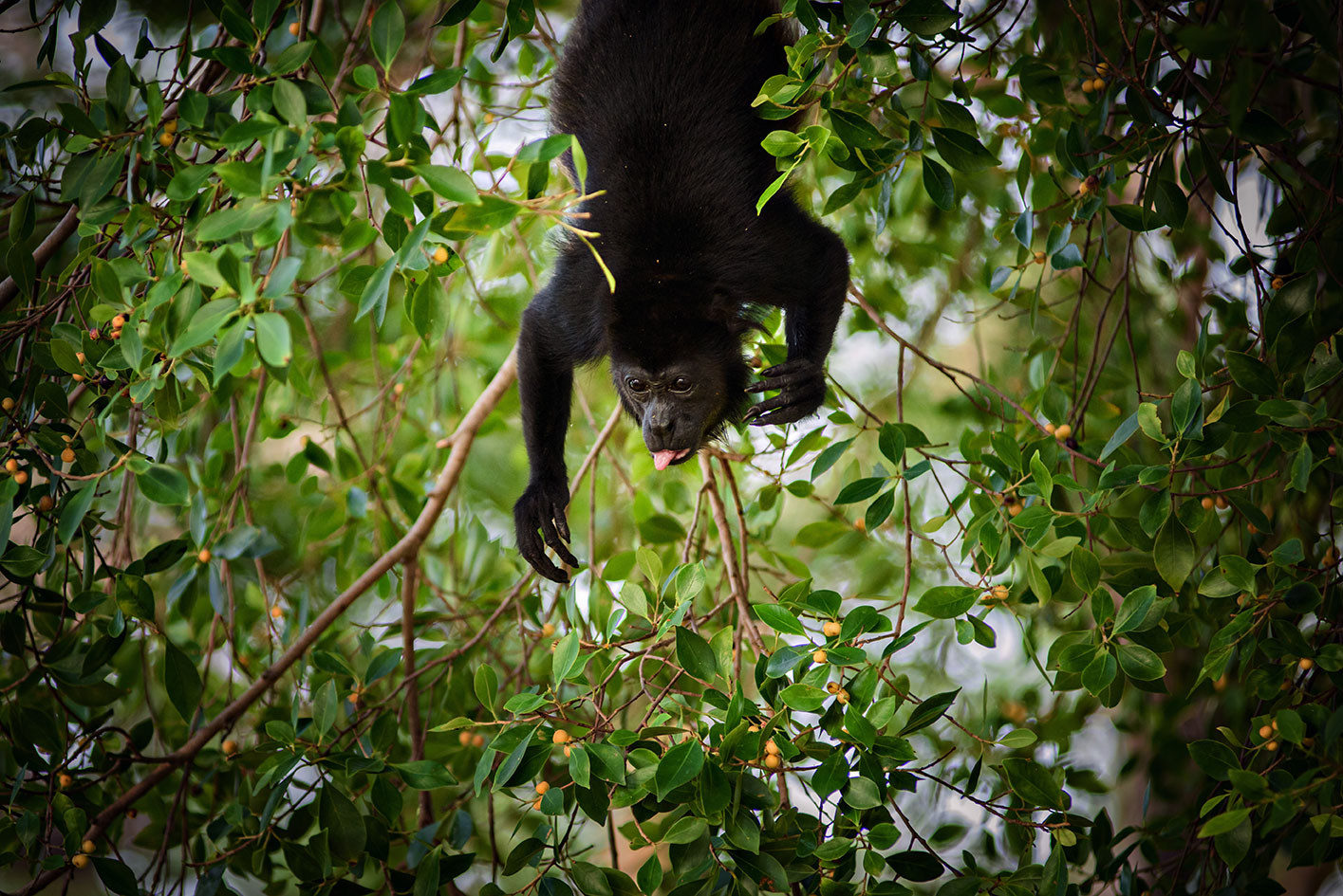 Monkey Manuel Antonio Costa Rica Photo: Christina Craft