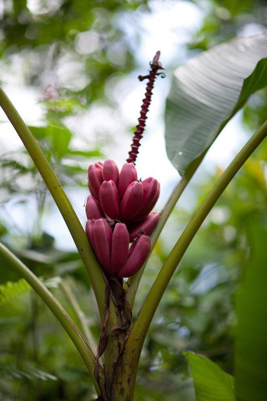 Flowers Costa Rica