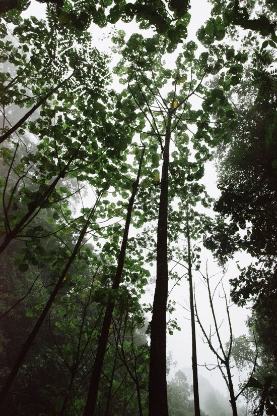 Beautiful Trees Costa Rica