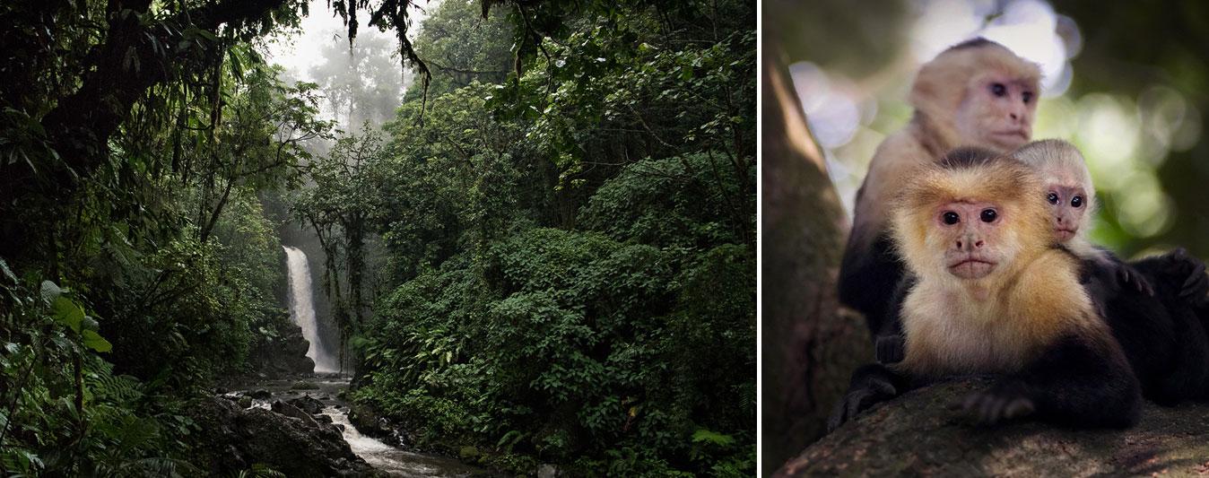 Waterfall Monkeys Costa Rica