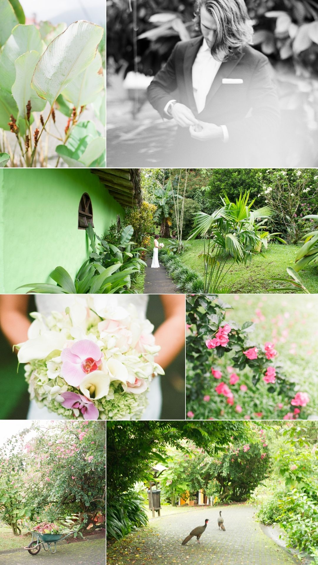 first looks in the garden near Arenal Volcano Costa Rica