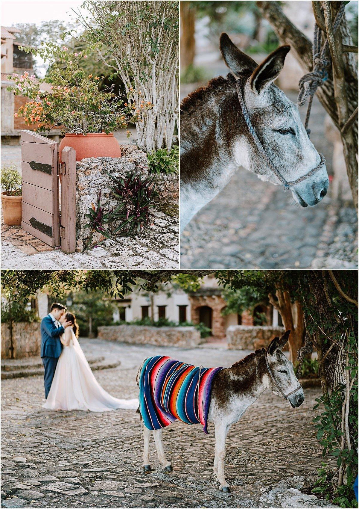 donkeys in Altos de Chavón